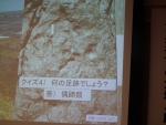 京丹後の足跡化石