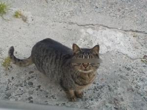 DSCN1845 猫のようないきもの