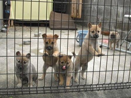 小さな保護犬たち