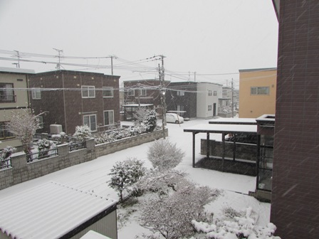 雪、降ってるよ