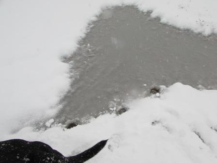 ハート型の氷