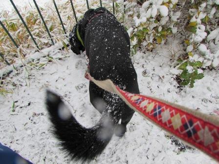 雪の中でも飽きもせず