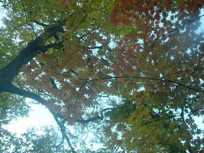 20151012雨飾山06