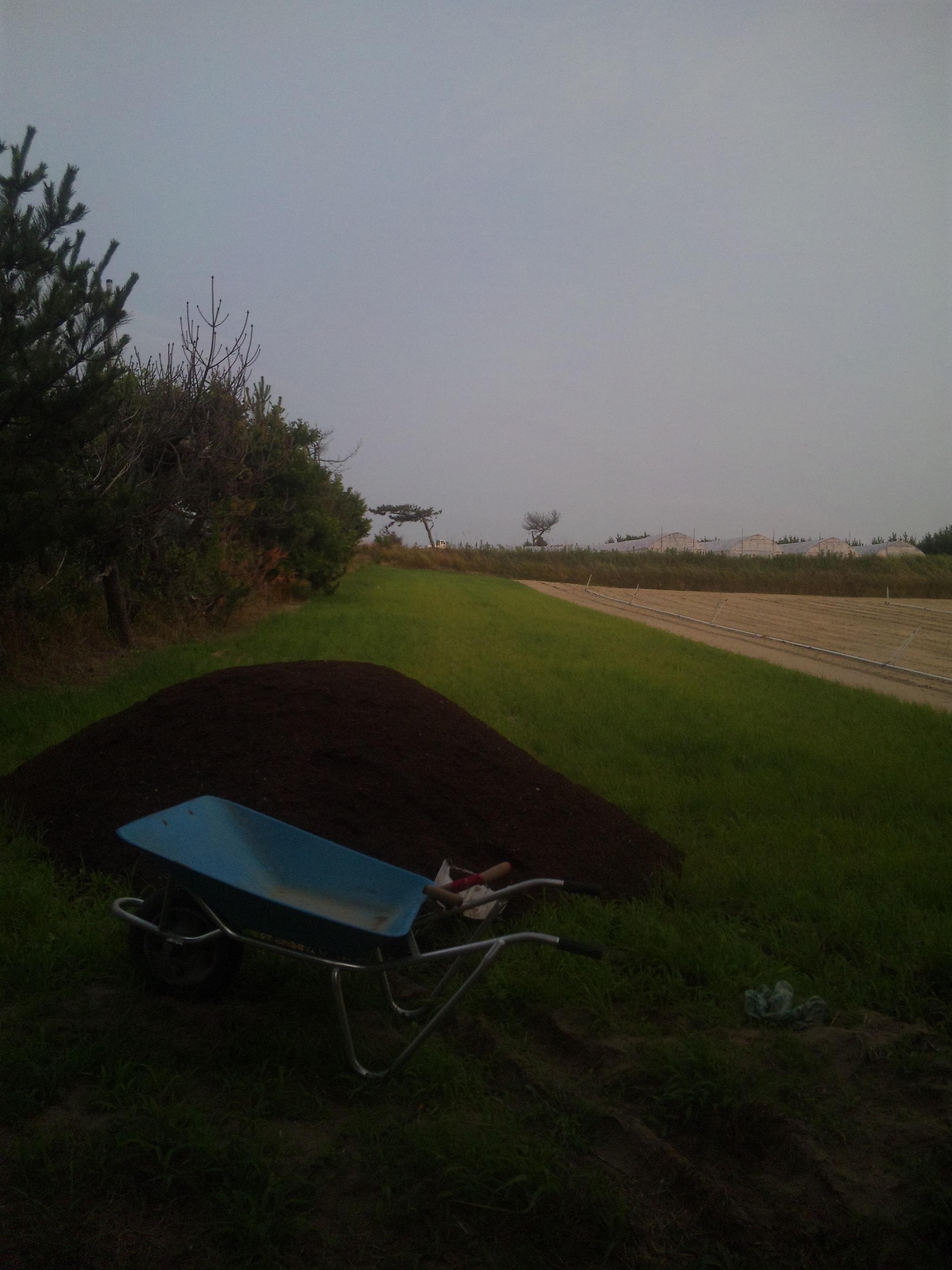ニンジン研修堆肥まき