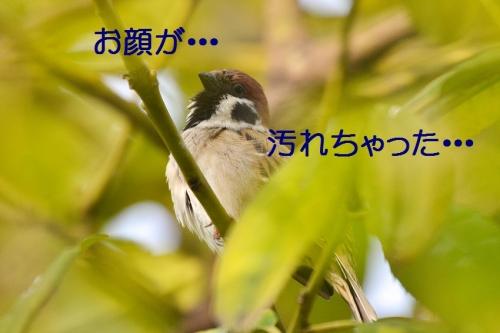 010_20160316192441e6a.jpg