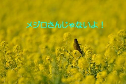020_201603141934220b9.jpg