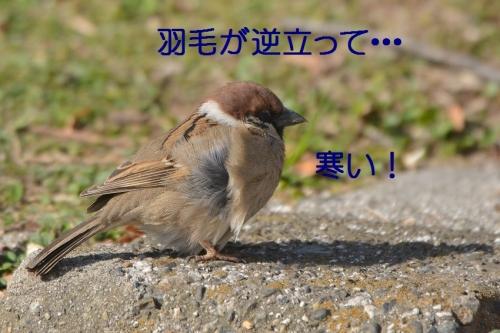 020_20160325191147fee.jpg