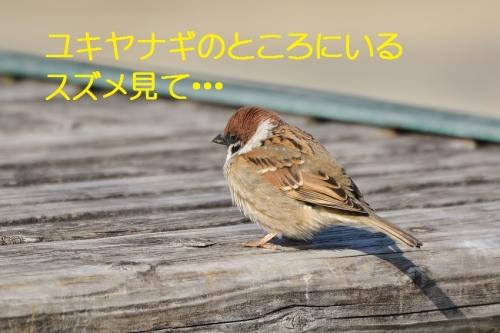 020_20160327215708a1a.jpg