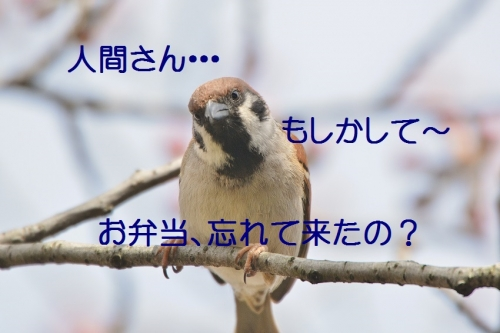020_20160403210251c10.jpg