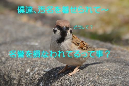 020_20160404193020b5d.jpg