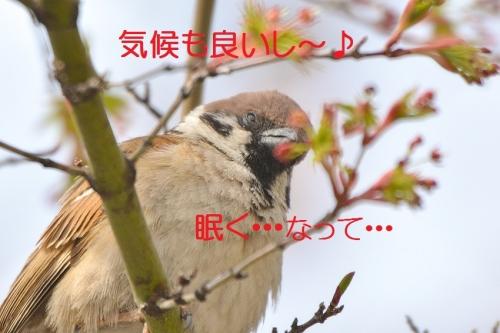 020_20160410202835f51.jpg