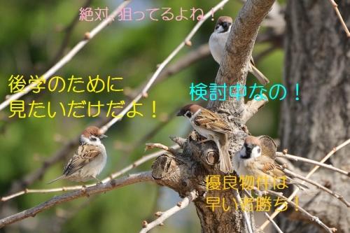030_20160317181032ce5.jpg