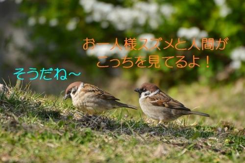 030_20160327215709c8f.jpg