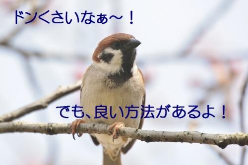 030_20160403210253361.jpg