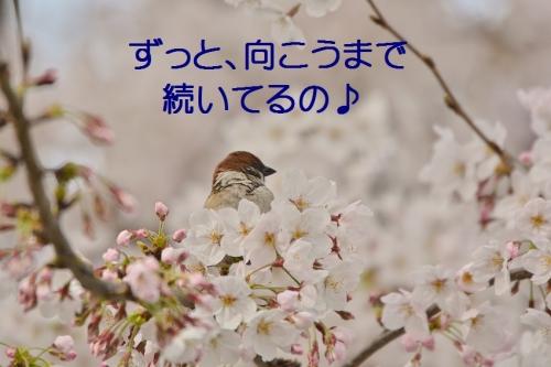 030_201604061839005b0.jpg