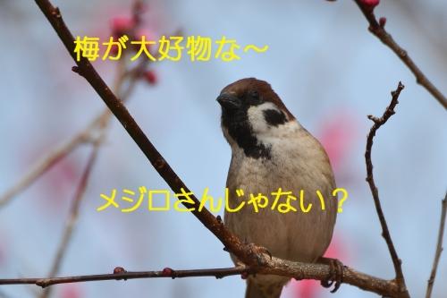 040_20160315204139c59.jpg