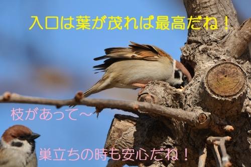 040_2016031821163233b.jpg