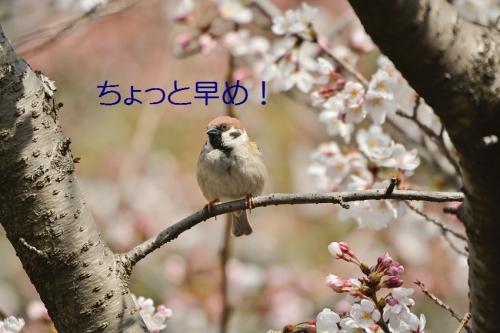 040_201604021915314f0.jpg