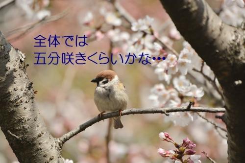 050_201604021915335cf.jpg