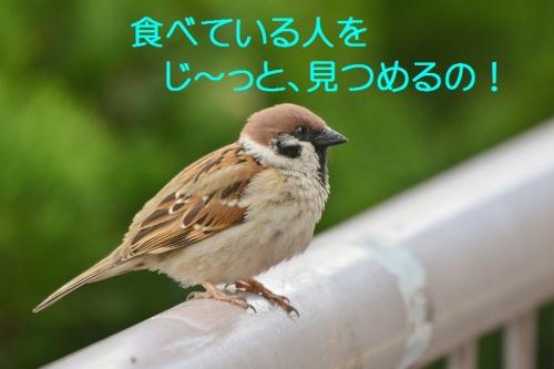 050_20160403210256dac.jpg