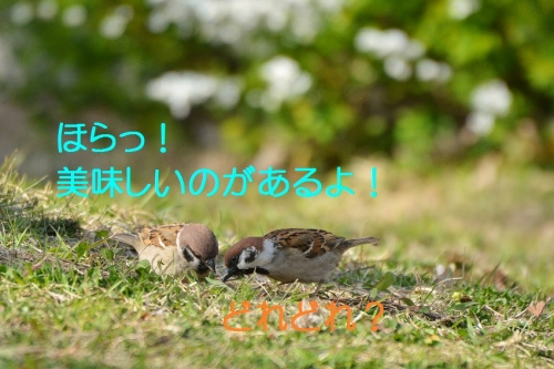 060_20160327215743f0c.jpg