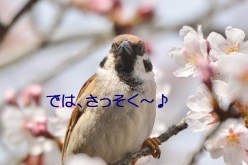 060_20160402191751352.jpg