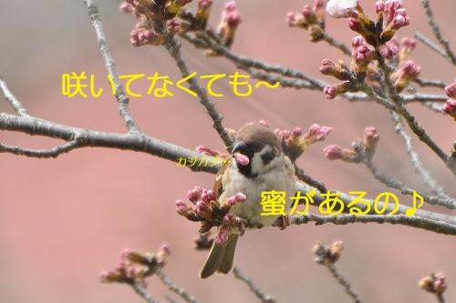 060_20160404193104cff.jpg