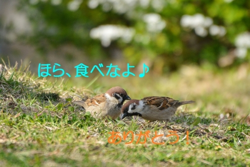 070_20160327215744e97.jpg