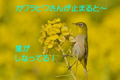 090_201603141937556a3.jpg