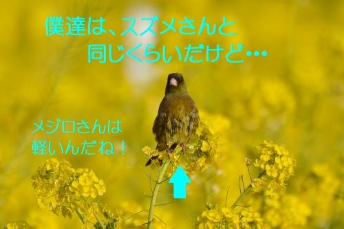 100_20160314193755e14.jpg