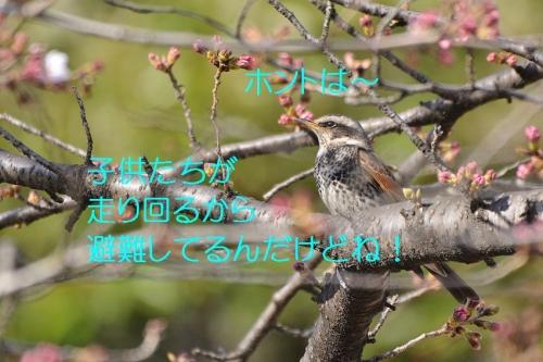 100_20160325191524a82.jpg