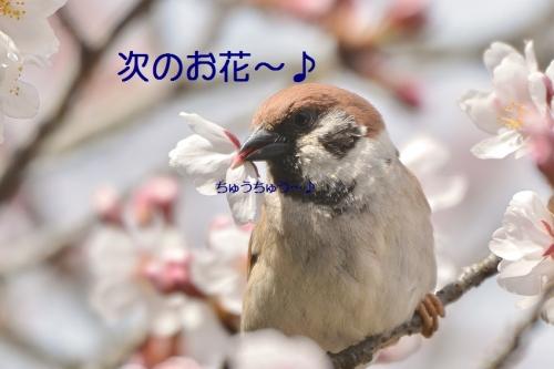 100_2016040219175756a.jpg