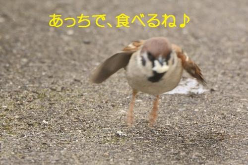 100_20160403210450147.jpg
