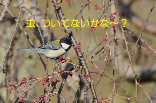 110_20160326210129c5f.jpg