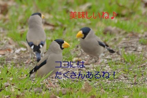 110_20160328202228612.jpg