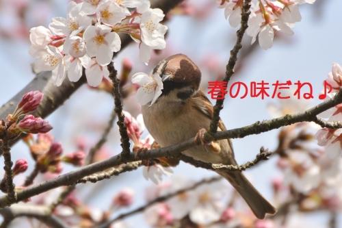 110_201604021918489aa.jpg