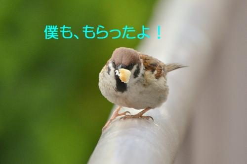110_20160403210450889.jpg