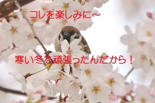 110_20160406183935b5a.jpg