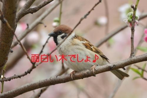 110_20160410203414d65.jpg