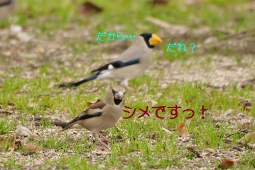 130_20160324184934d9c.jpg