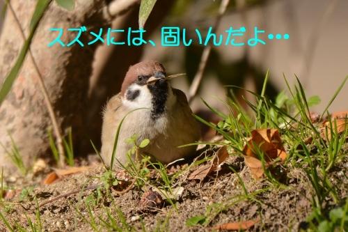 130_20160328202231c40.jpg