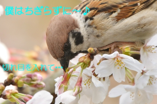 130_20160402191851777.jpg