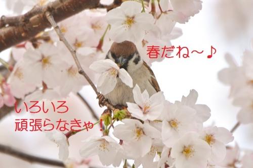 130_20160406183938d15.jpg