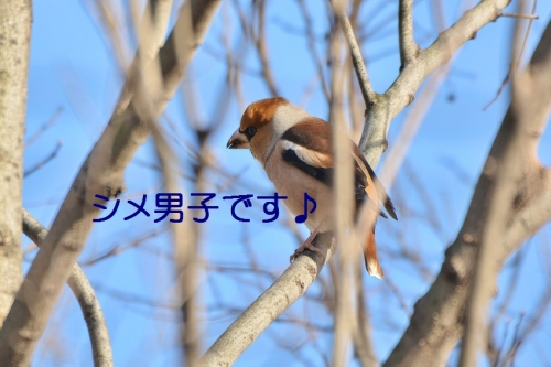 140_20160324184936f0a.jpg
