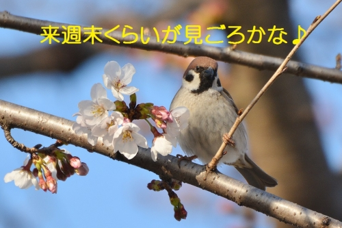 140_20160326210133c88.jpg