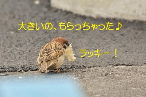140_20160403210603b37.jpg