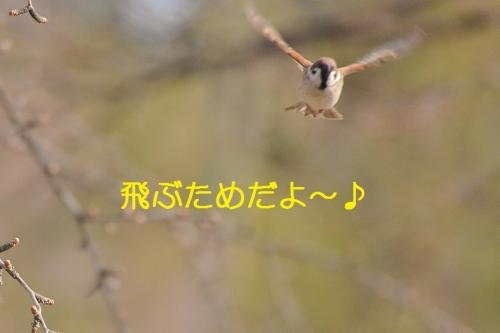 150_2016031419383591a.jpg