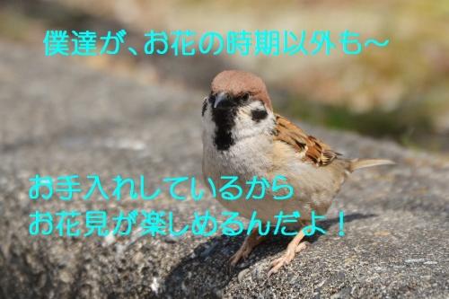 160_20160404193231623.jpg