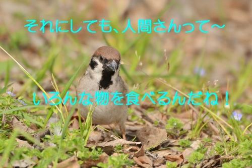 160_2016040521113106c.jpg