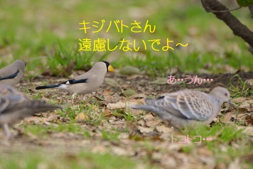 170_20160324184941c38.jpg
